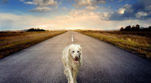 dog-3640784_640